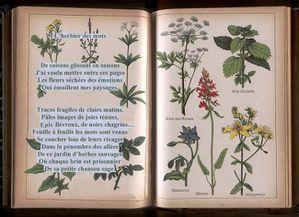 l-herbier--des--mots-page-d-accueilbis-et--ter.JPG