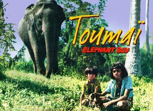 Toumai-elephant-boy