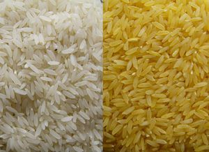 GoldenRice-WhiteRice