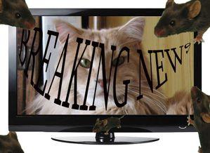 tv-news-40
