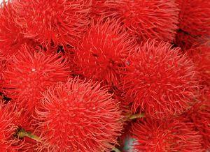 20060126164309!Rambutan Fruit