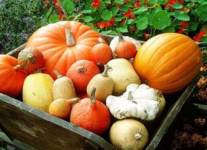 courges-diverses.jpg