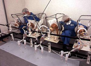 Vivisection_chiens--10-.jpg
