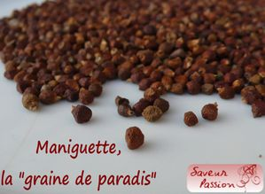 maniguette.jpg