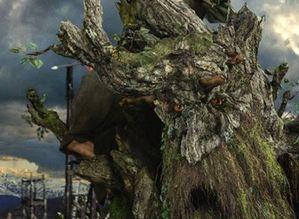 treebeard4.jpg