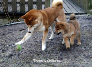 pere-chien-socialise-chiot.jpg