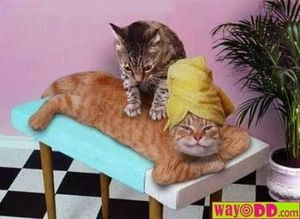 funny-pictures-the-cat-massage-1OV.jpg