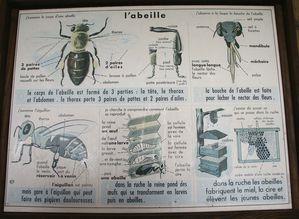cite-des-abeilles2.jpg