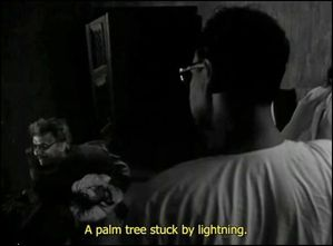 Palm tree struck by lightning