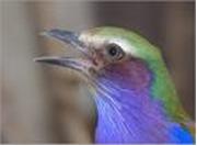 oiseau2.png