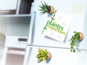 plante_magnets-copie-2.jpg