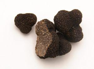 la-truffe-un-diamant-noir