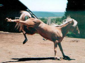 kickinghorse1.jpg
