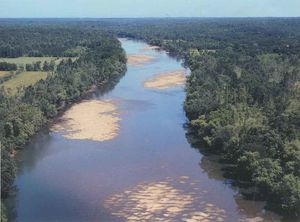savannah_river2.jpg