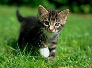 chaton-printemps-2.jpg