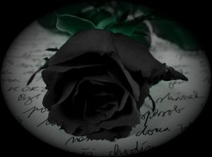 Black_Rose_by_.jpg
