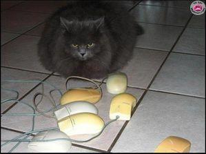 chat sourispc