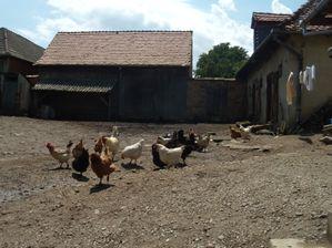 Cour de la ferme Jaglea