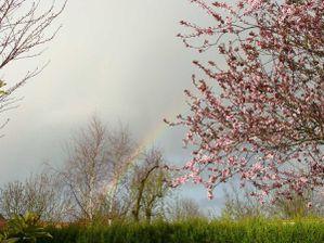 Lilian-May-Miller---Rain-blossoms-Arc-en-ciel-27.jpg