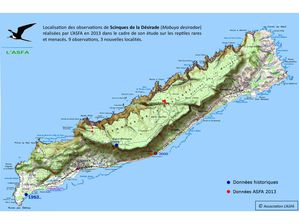 carto asfa scinques de la Désirade 2013