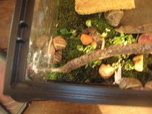 escargots 016