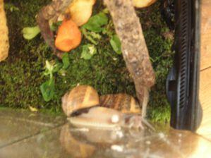 escargots 019