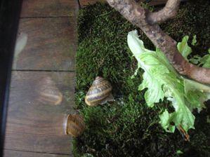 escargots 075