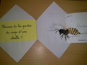 lap-book-abeille-008-copie-1.jpg