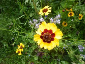 jardin--9-.JPG