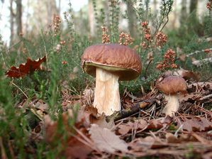 cepes bordeaux1