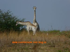 Africa.Botswana (Camp Selinda-Linyanti)a.12