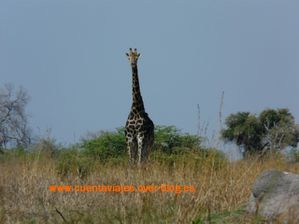 Africa.Botswana (Camp Selinda-Linyanti)a.16