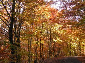 automneaqz.jpg