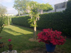 Mon jardin le blog de rainbow - Terrasse surplombant mon jardin metz ...