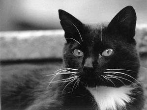 gato-20blanco-20y-20negro-1-.jpg