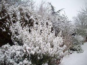 hiver 15 fevr 2010 001