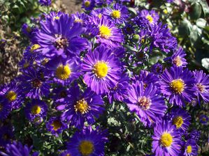 ASTER (1)