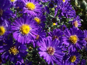 ASTER (3)