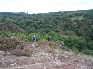 broceliande-015.JPG