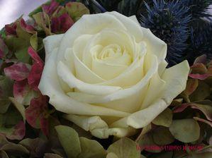 Retour de brocante 12 rose blanche-
