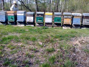 Rucher-18-avril-2010-016.jpg
