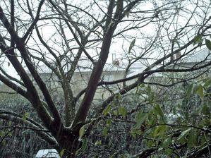 neige--sur-toulouse-nov-2010-015_modifie-1.jpg