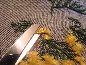 mimosa 3