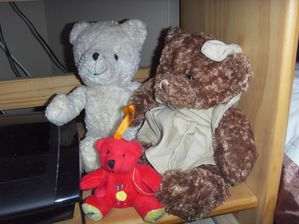les-ours-003.JPG