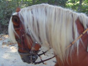 cheval2011 008