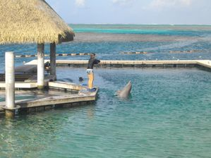 Pin piscine les dauphins on pinterest for Piscine 3 dauphins
