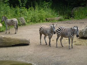 zoo lille (9)