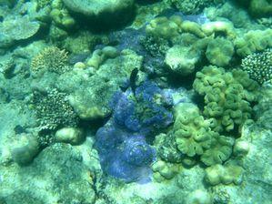 Plongee-Mickaelmas-Cay-0--28-.jpg