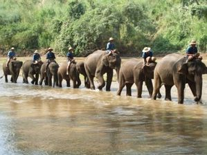 elephants-walking-to.jpg