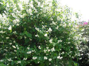 Jardin 05mai 2011 007